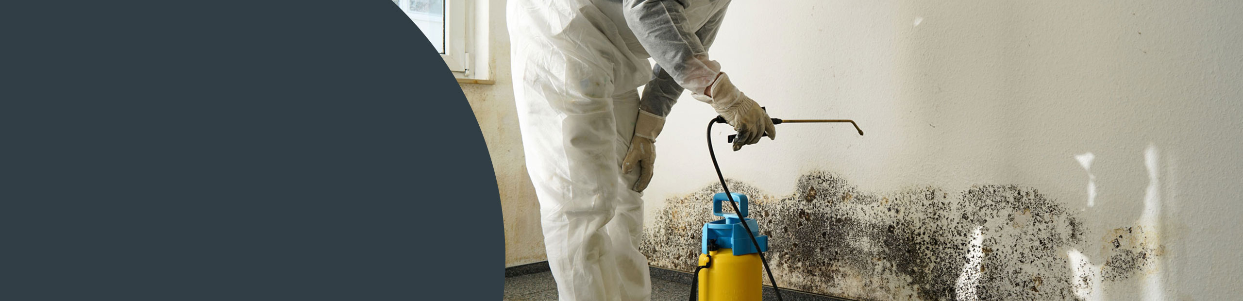 Mould Remediation East Sussex