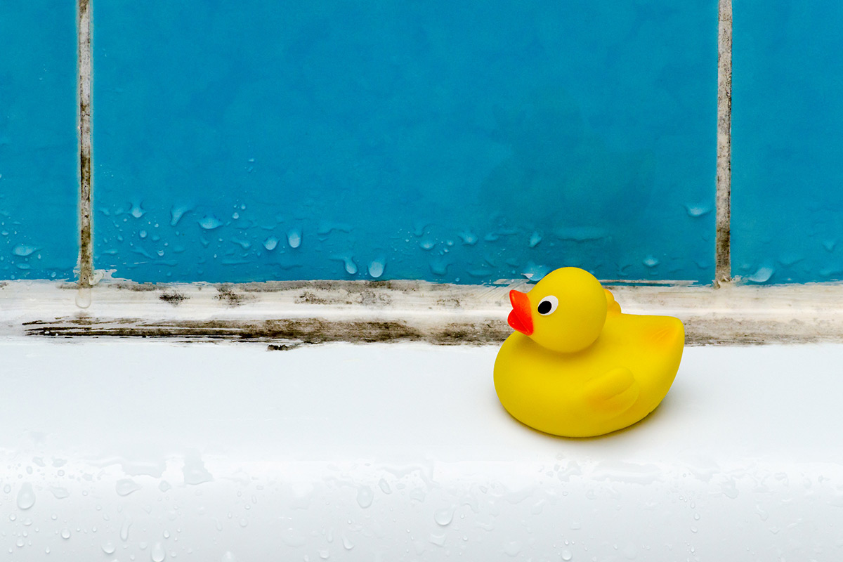 Rubber duck next to black mould on sealant and grout